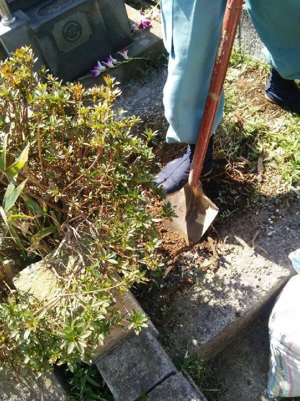 植木伐採・抜根